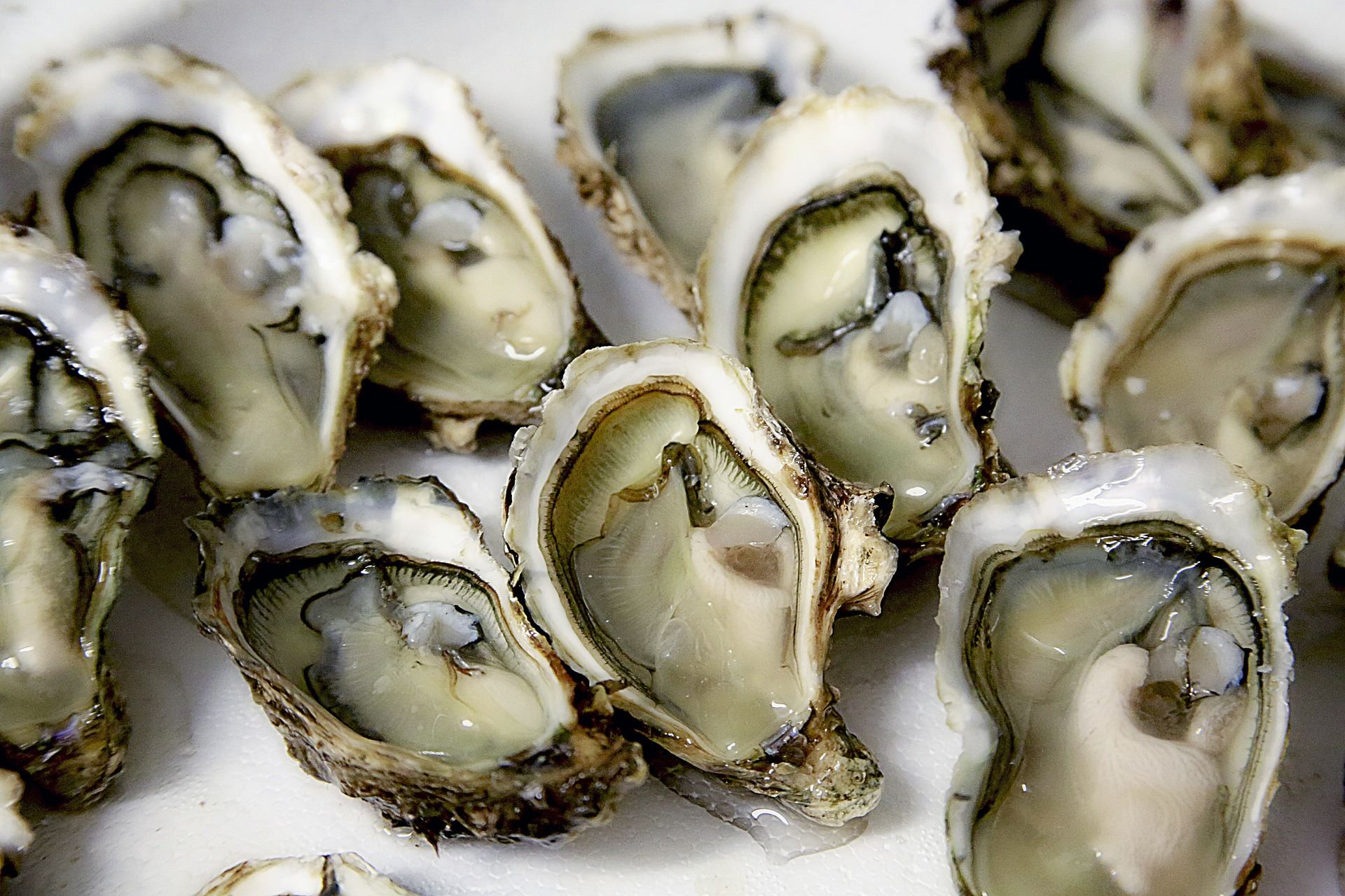 Oysters Generic