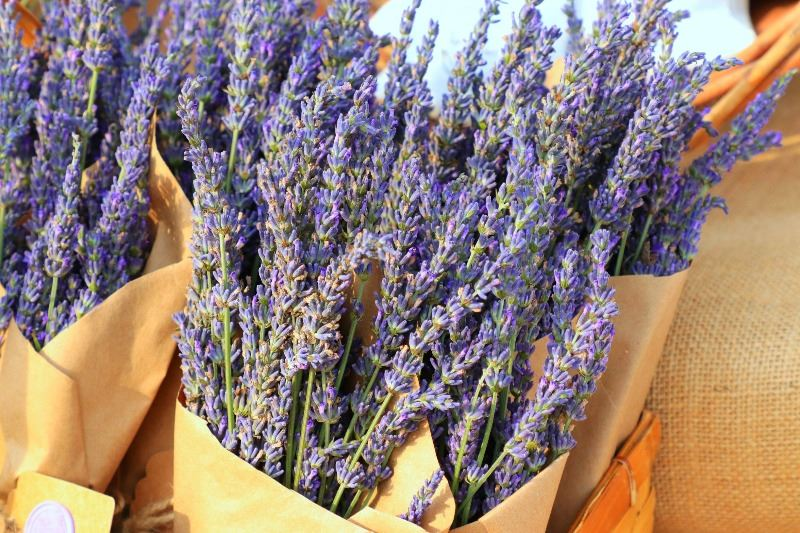 Edit Colonial Lavender